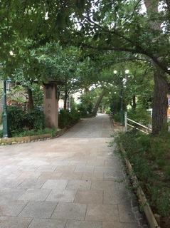 花の道.JPG